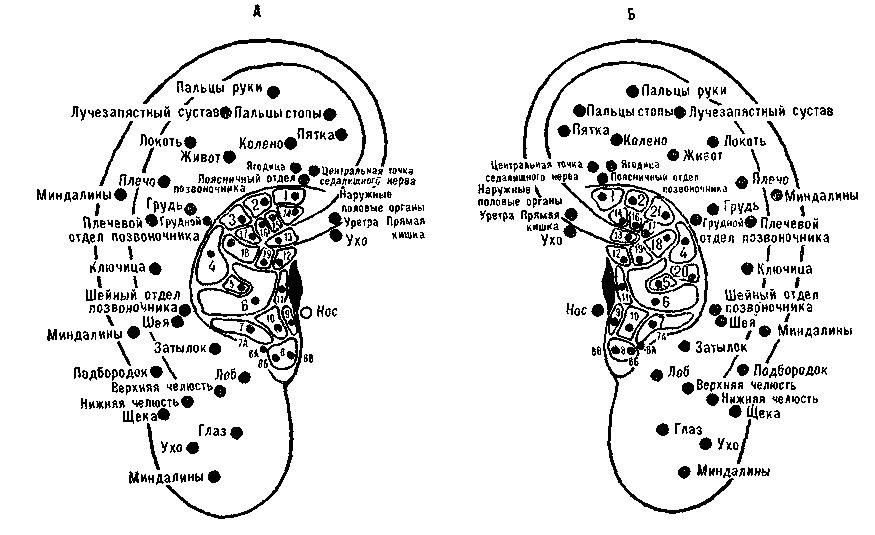 точках ушной раковины,